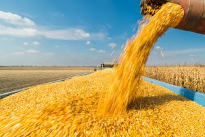 Another Unhappy Year for U.S. Farmers Despite Phase 1 Trade Deal
